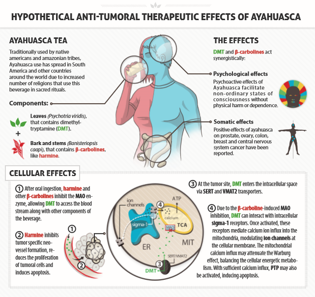 Ayahuasca and cancer treatment